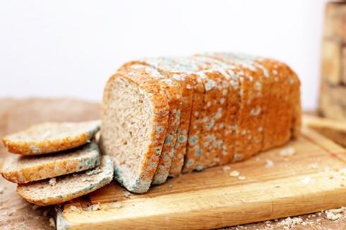 Tuyệt đối không nên ăn các loại thực phẩm đã bị mốc nếu không muốn bị ngộ độc và lão hóa sớm