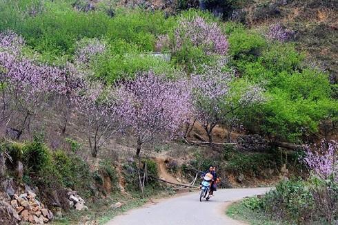Top những điểm du lịch hấp dẫn nhất Việt Nam dịp Tết Nguyên đán 2019 ảnh 4