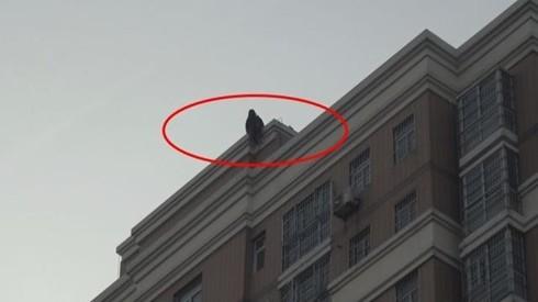 Cô gái ngồi vắt vẻo trên tầng thượng tòa nhà 18 tầng ở Phụ Dương