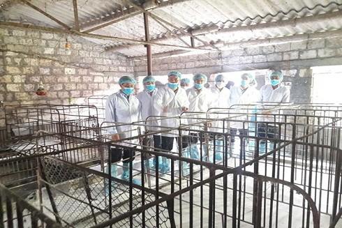 Lãnh đạo Bộ NN&PTNT kiểm tra phòng, chống dịch tả lợn châu Phi ở Hải Phòng