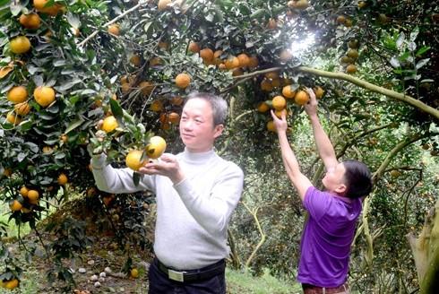 Thú vị về những ngôi làng tỷ phú giàu nhất tại Việt Nam ảnh 4