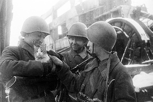 Binh sỹ Hồng quân vuốt ve một chú mèo trong thành phố Leningrad (Nguồn: Sputnik)