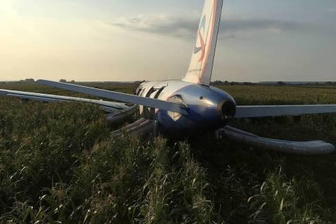 Chiếc máy bay hạ cánh khẩn cấp xuống một cánh đồng ngô thuộc khu vực ngoại ô Moscow (Ảnh TASS)