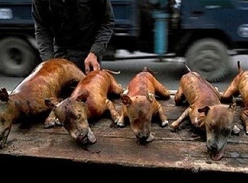 Người tiêu dùng rất dễ mua phải thịt chó đã chết hoặc tồn dư hóa chất