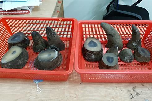6,22kg sừng tê giác được đối tượng cất giấu tinh vi trong hành lý cá nhân (Nguồn: Lao động)