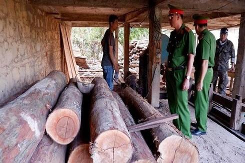 Phát hiện gỗ không có giấy tờ tại xưởng gỗ tư nhân.