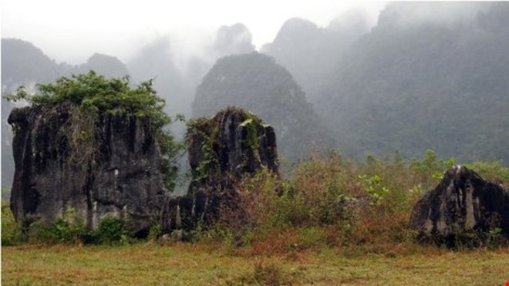 Những cành cây nhỏ trên tảng đá cũng được giữ nguyên trạng