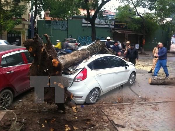 Cây cổ thụ gãy đổ đè bẹp rúm ôtô trên phố Lý Thường Kiệt