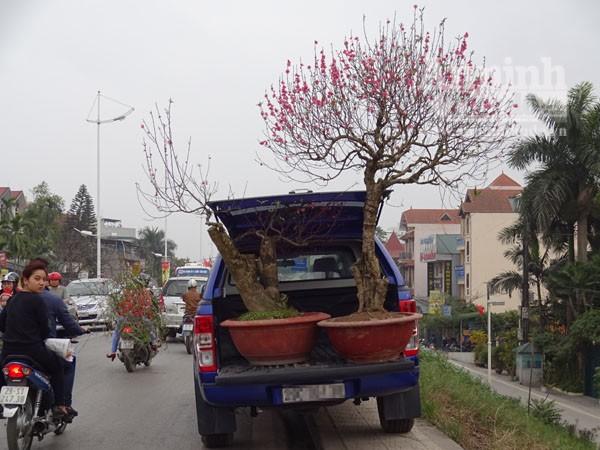 Đổ xô đi mua hoa giá rẻ gây ùn tắc cục bộ trên đường Âu Cơ ảnh 13