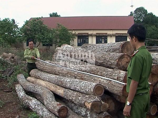 Bắt quả tang xe tải chở hơn 11m3 gỗ lậu ảnh 1