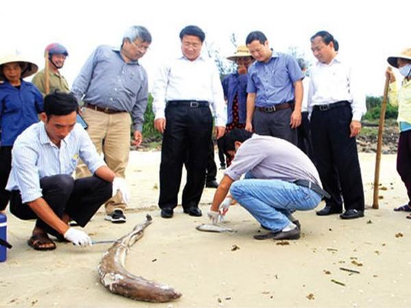 Kết luận ban đầu vụ cá chết: Có thể do độc tố có độc lực mạnh ảnh 1
