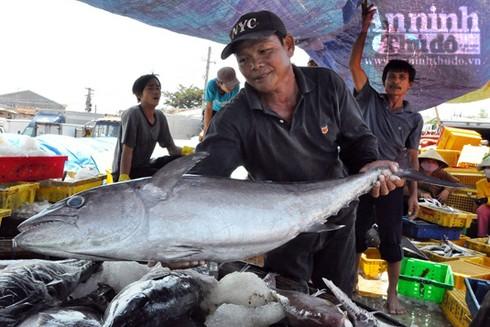 Nhiều tàu cá của ngư dân Quảng Ngãi trúng đậm trong những chuyến đi biển đầu Xuân Đinh Dậu 2017