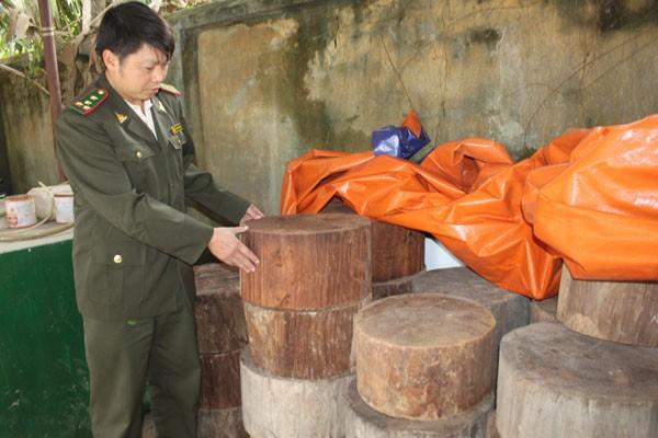 """Thớt nghiến """"băm nát"""" rừng Phong Quang ảnh 2"""