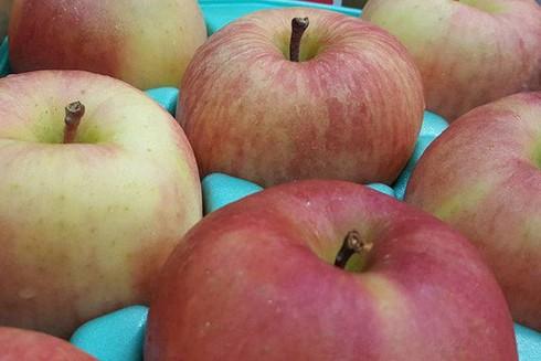 Vì sao trái cây nội rẻ bèo, dân vẫn xếp hàng đi mua quả ngoại? ảnh 2