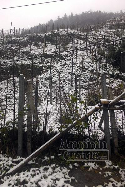 Tuyết rơi trắng xóa Ô Quy Hồ, du khách đổ về Sa Pa ảnh 3