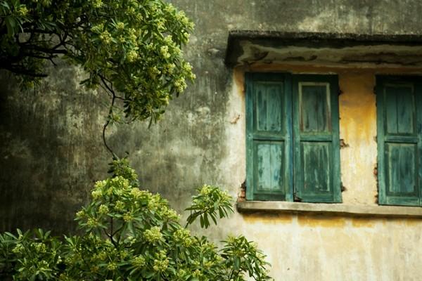 Ngắm những góc phố Hà Nội tràn ngập hoa sữa ảnh 5