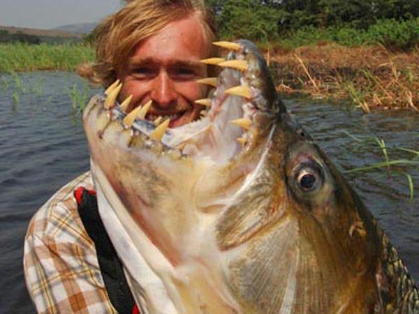Thú kinh dị của dân chơi Hà Nội: Nuôi thủy quái hổ Congo ảnh 10