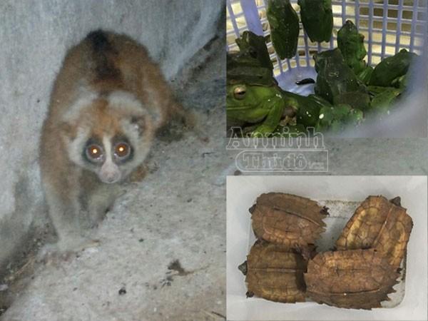 Bắt giữ 2 đối tượng vận chuyển nhiều cá thể động vật hoang dã