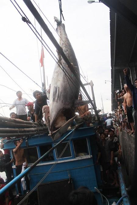 """Những lần đưa """"thủy quái"""" lên bờ của cần thủ, ngư dân Việt"""