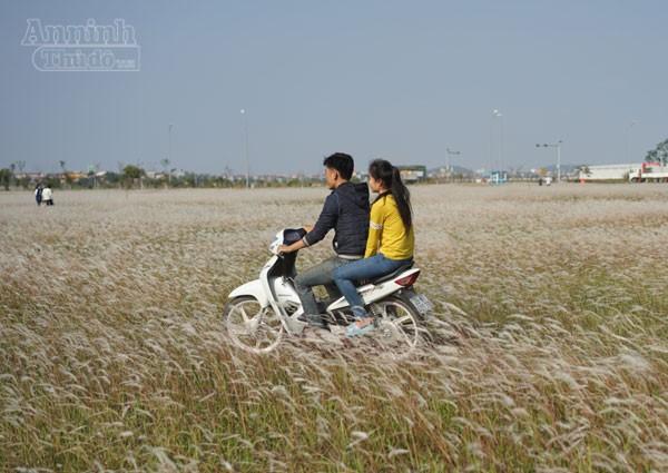 Xuất hiện bãi cỏ lau khổng lồ, đẹp như tranh ngay sát Hà Nội ảnh 5
