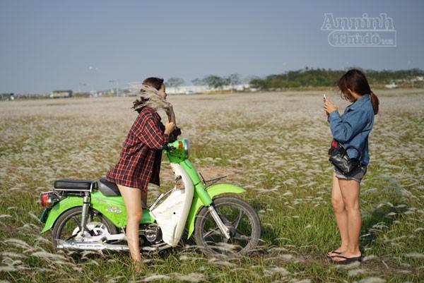 Xuất hiện bãi cỏ lau khổng lồ, đẹp như tranh ngay sát Hà Nội ảnh 3