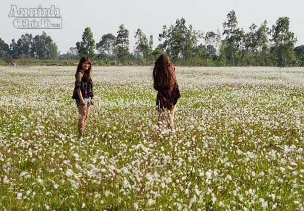 Xuất hiện bãi cỏ lau khổng lồ, đẹp như tranh ngay sát Hà Nội ảnh 8