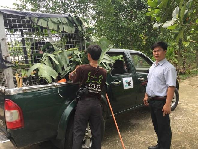 Chuyển giao con gấu ngựa đến Trạm Cứu hộ gấu thuộc Vườn Quốc gia Cát Tiên