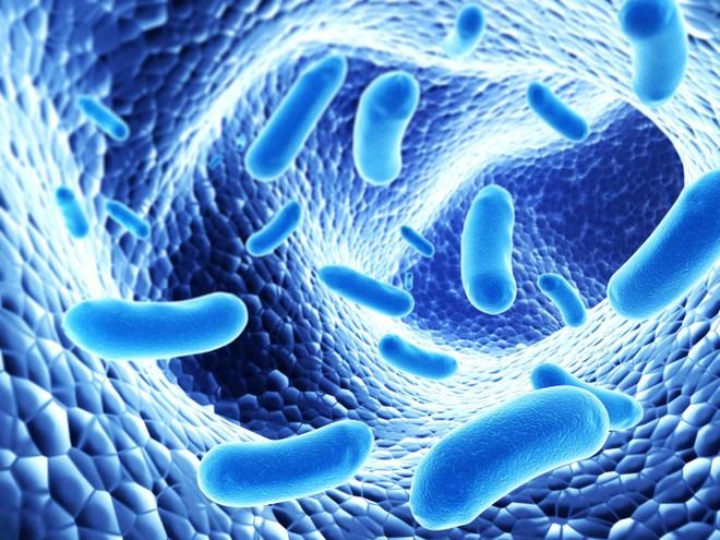 Lợi khuẩn Bifido giúp hạn chế tình trạng bệnh tình tái phát nhiều lần