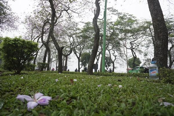 Dáng hình cô gái Thái trong loài hoa ban trên đường Hà Nội ảnh 4