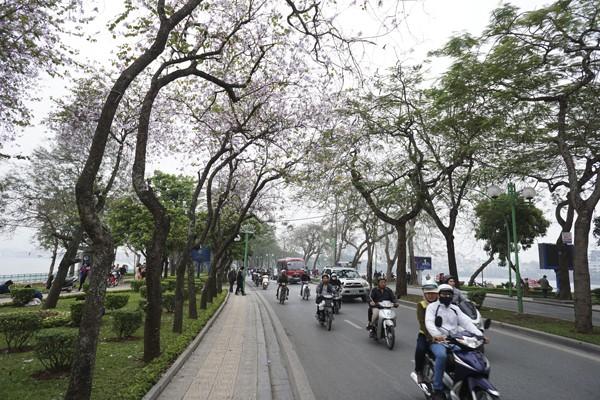 Dáng hình cô gái Thái trong loài hoa ban trên đường Hà Nội ảnh 9