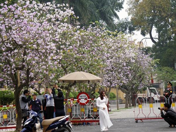 Dáng hình cô gái Thái trong loài hoa ban trên đường Hà Nội ảnh 11