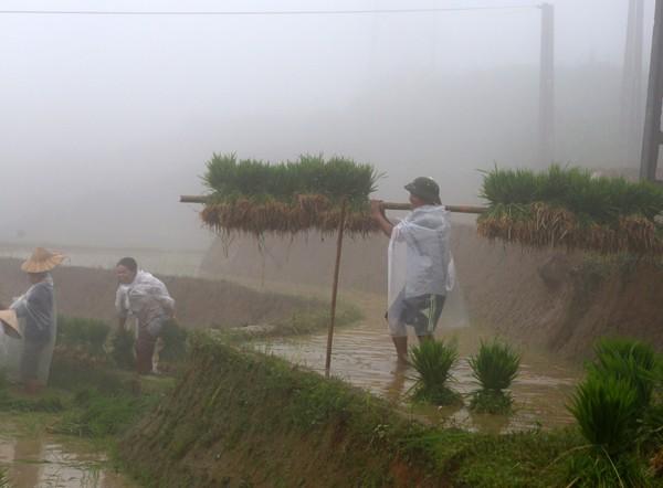 Người dân xuống đồng trong sương sớm