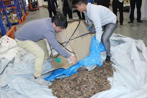 Lực lượng chức năng kiểm tra lô hàng văn phòng phẩm phát hiện số lượng vảy tê tê