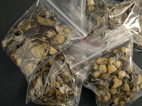 Nấm có chứa chất tương tự ma túy thẩm lậu vào Việt Nam