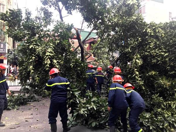 Lực lượng Cảnh sát PCCC và CNCH - CATP Hà Nội cưa cắt cây đổ chắn ngang phố