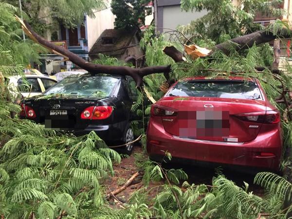 Mưa bão cây đổ làm thiệt hại nhiều tài sản, phương tiện
