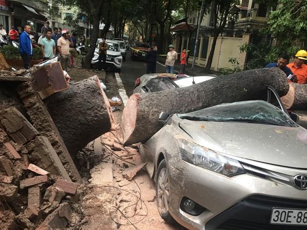 Lực lượng CNCH cưa cây, cứu hộ chiếc xe gặp nạn