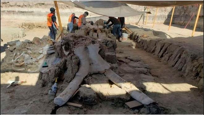 Mexico: Phát lộ hàng chục bộ xương voi ma mút tại khu đất xây sân bay mới