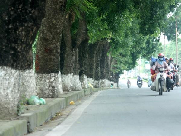 Hà Nội thay thế 6.700 cây xanh trên 190 tuyến phố ảnh 1