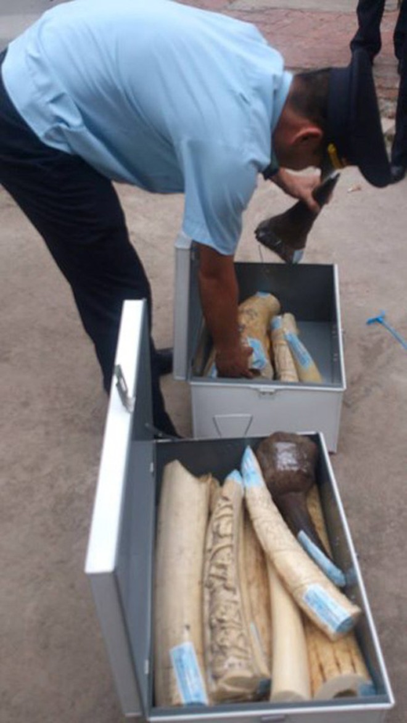 Lô hàng sản phẩm động vật hoang dã, nghi vấn là sừng tê giác và ngà voi