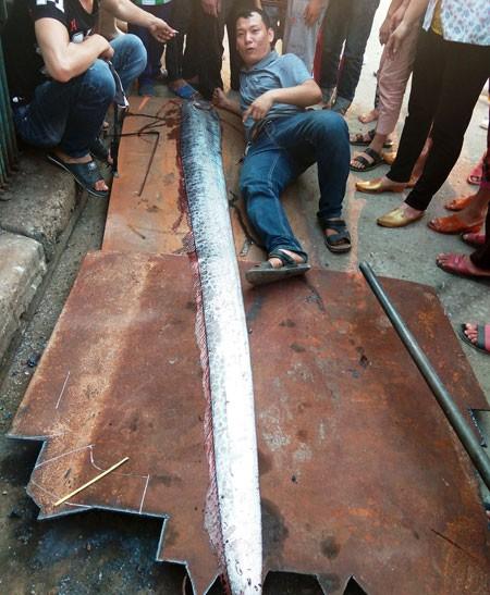 Con cá được phát hiện dài khoảng 3,6 mét (ảnh: G. Huy)