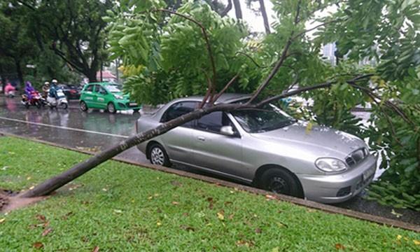 Nhiều ô tô bị cây xanh gẫy, đổ đè lên.