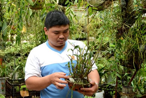 Anh Công chăm sóc cho vườn lan tại nhà