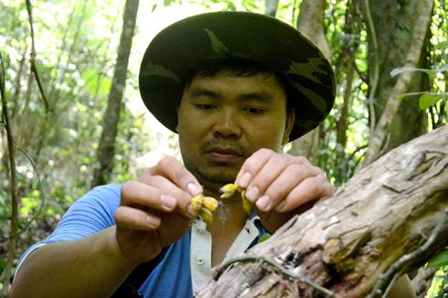 Anh Công xé hạt, gieo giống lan quý ở Vườn quốc gia Kon Ka Kinh