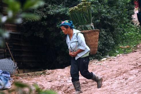 Lá dong được giá nên người dân đua nhau vào rừng hái về bán cho các thương lái