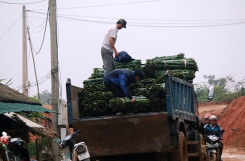 Những chiếc xe tải chở đầy lá dong chuẩn bị về xuôi
