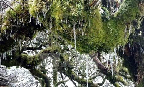 Tuyết đóng băng trên cây.