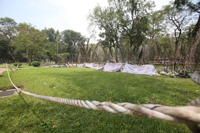 Tập kết cả trăm cây hoa anh đào ở Công viên Thống Nhất để làm gì?