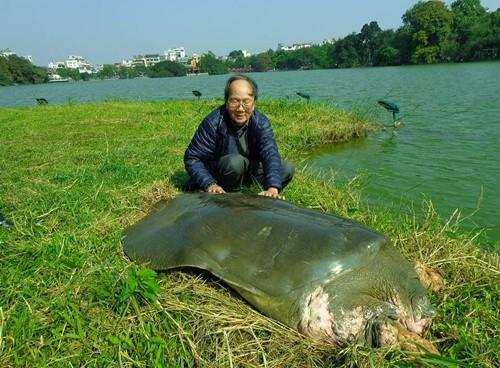 Nhà điêu khắc Đinh Công Đạt cho rằng, nếu làm tượng rùa, chỉ nên đúc nhỏ cỡ 500 gram