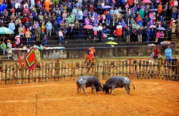 Tạm dừng tổ chức Lễ hội chọi trâu Phù Ninh, tập trung phòng chống dịch virus corona